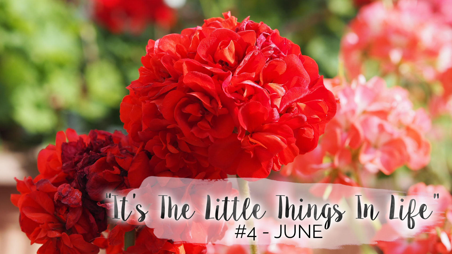 """""""It's The Little Things In Life"""" - #4 - June 